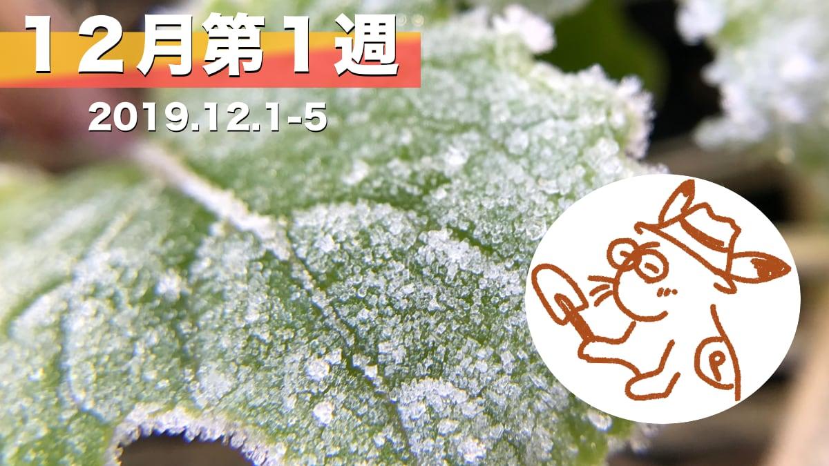 家庭菜園を楽しむー12月第1週の様子