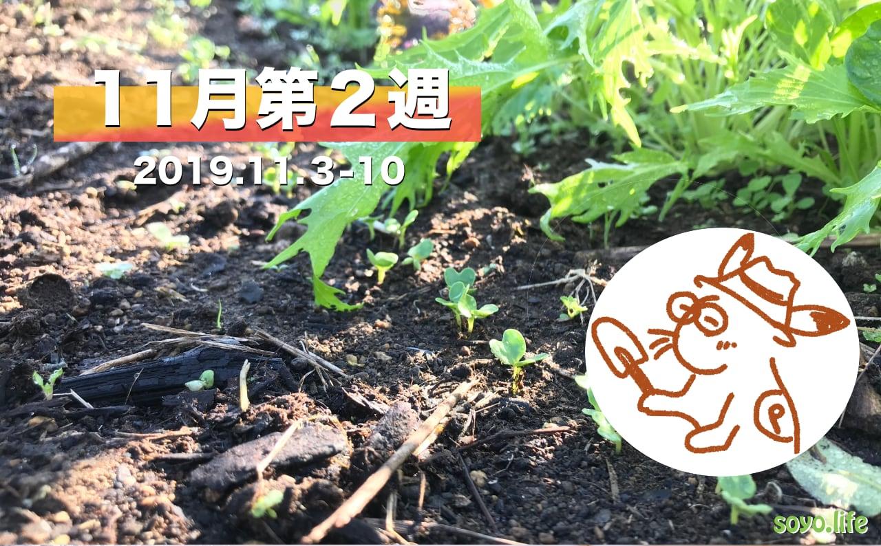 家庭菜園を楽しむー11月第2週の様子