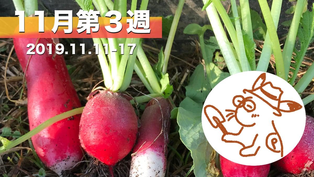 家庭菜園を楽しむー11月第3週の様子カード