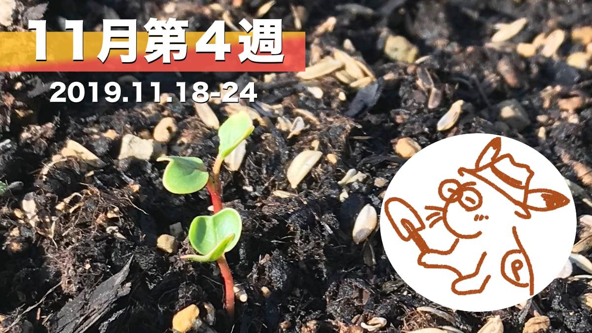 家庭菜園を楽しむー11月第4週の様子カード