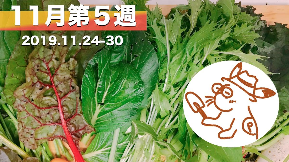 家庭菜園を楽しむー11月第5週の様子
