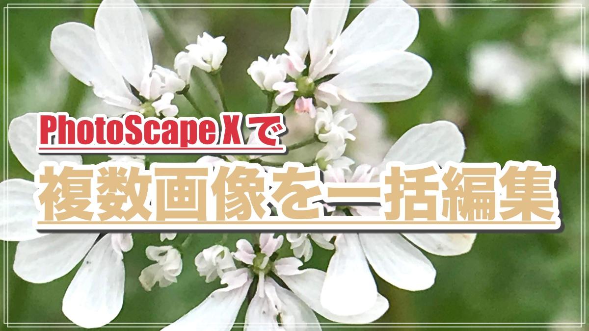 PhotoScape Xで複数画像を一括編集
